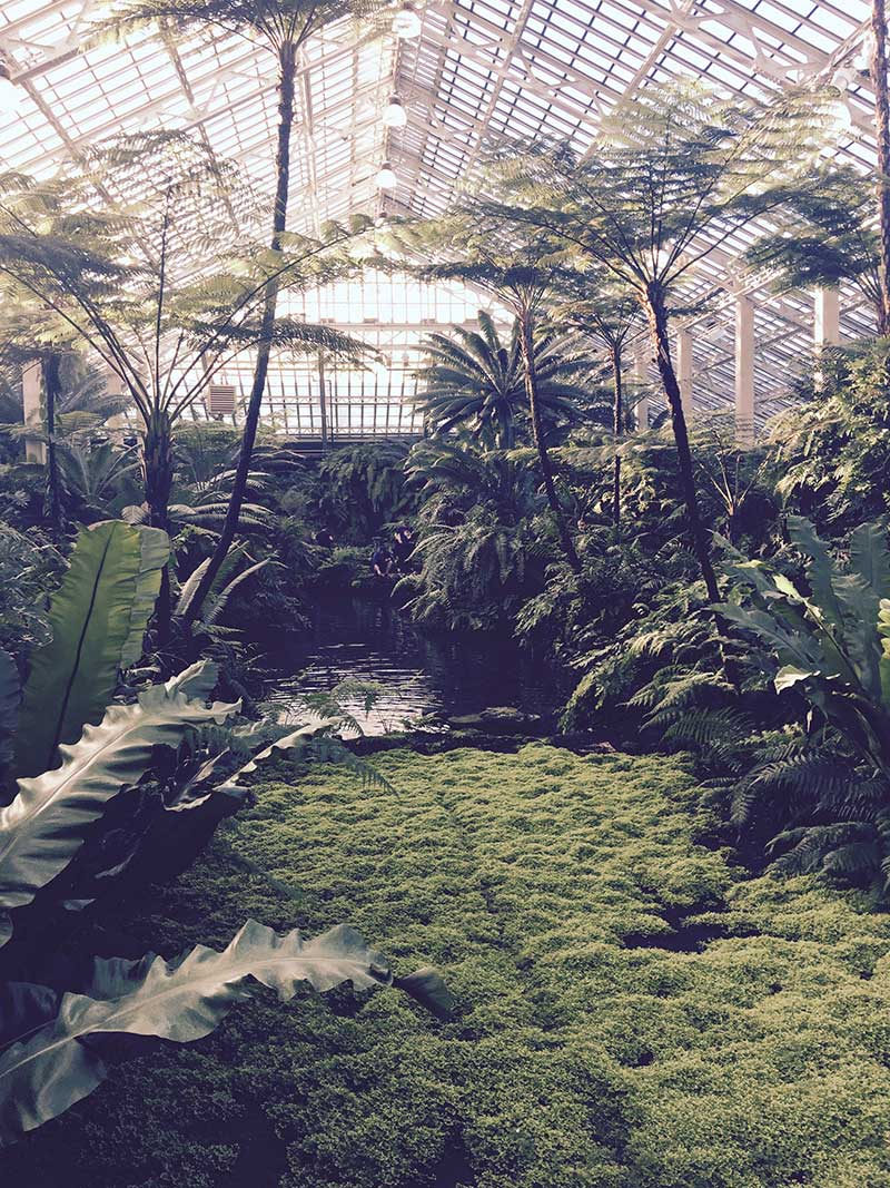 Meanwhile Back in January …. The Garfield Conservatory
